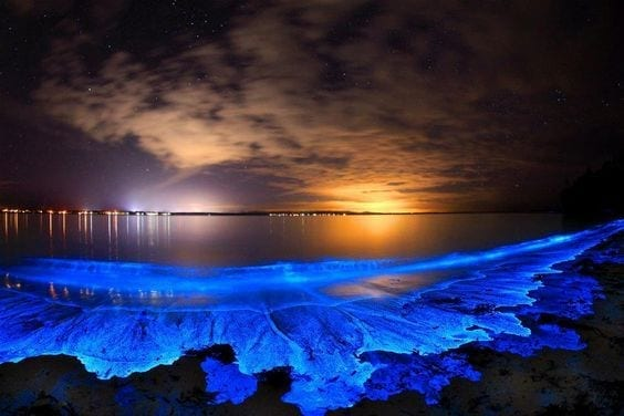 BIOLUMINESCENT in Cayman Islands
