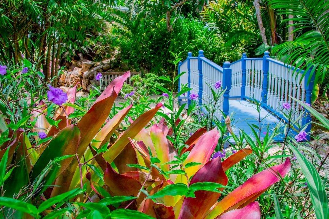 Botanical-Garden-Cayman-Islands