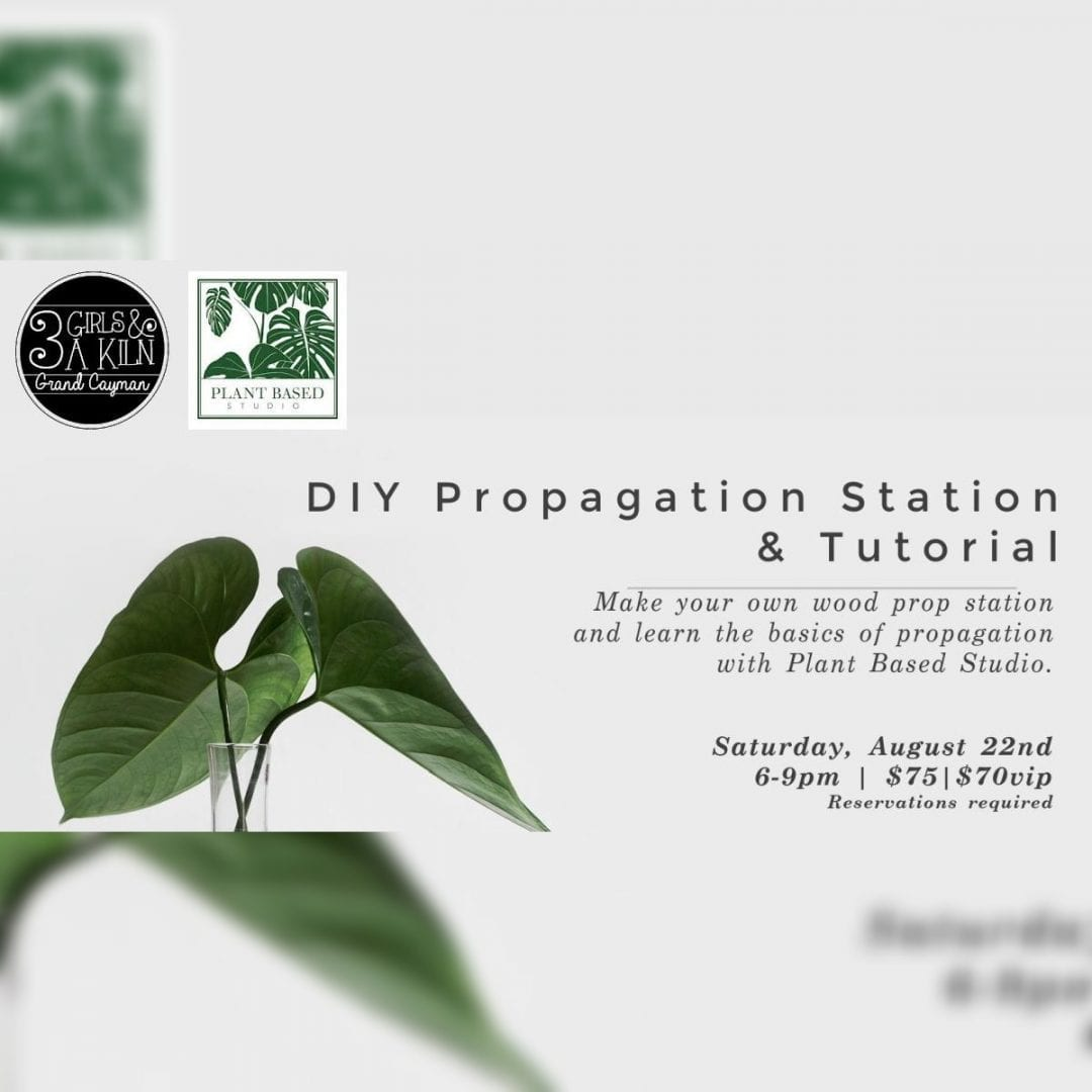 DIY Propagation Station and Tutorial
