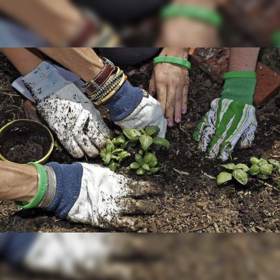 Free Community Gardening Classes